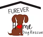 Furever Home Dog Rescue